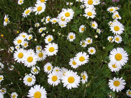 Not that I'd push daisies on anyone