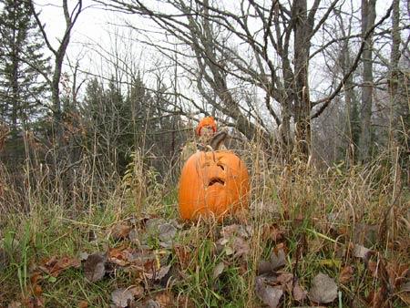 The pretty-good pumpkin rises